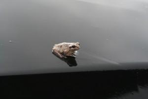 frog201608