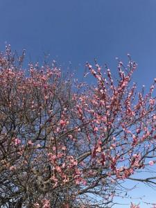 spring201902